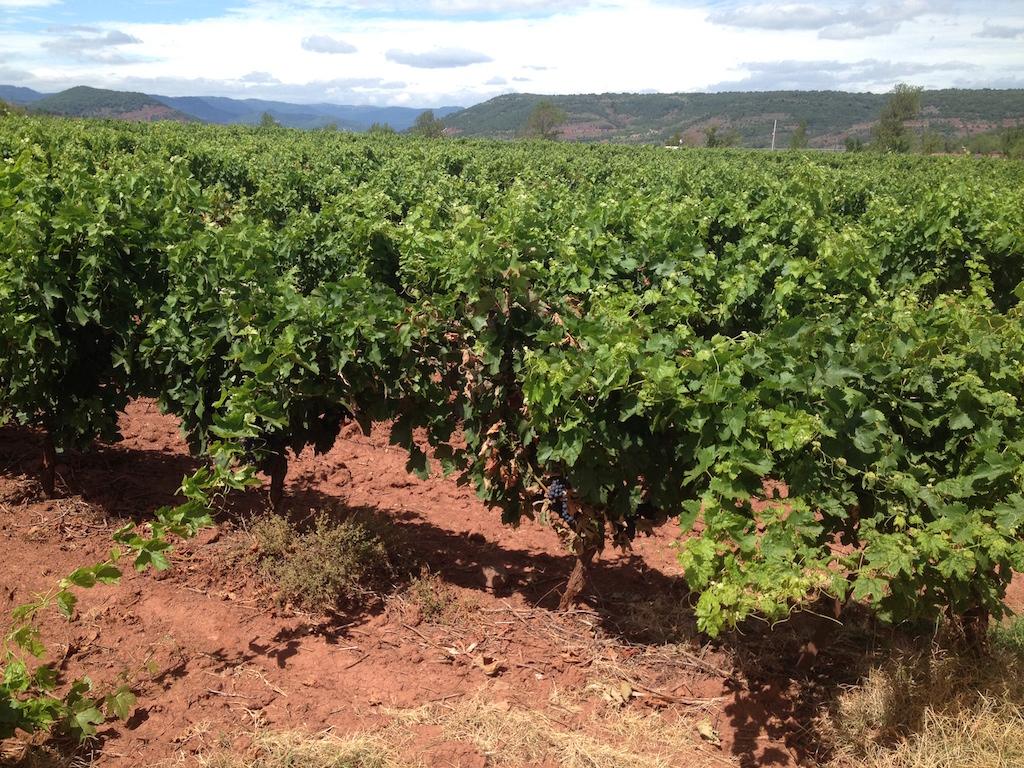 Languedoc-vins
